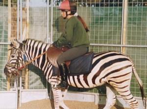Nicky Davies monta a Mombassa la cebra. Foto: Gary Whiteford