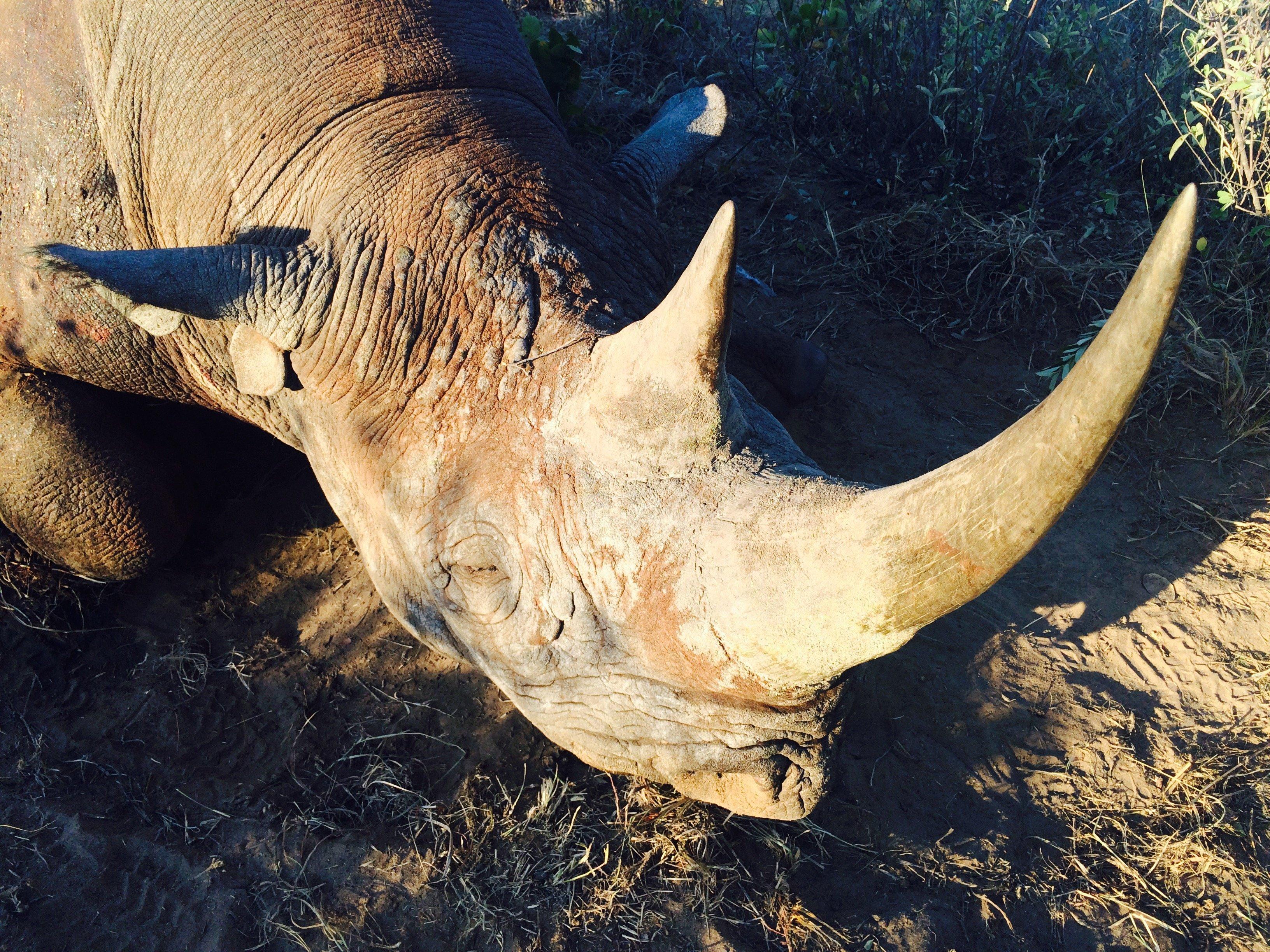Un cazador texano afirma que está colaborando a la conservación de la especie al cazar a un rinoceronte negro. (Crédito: Jason Morris/CNN)