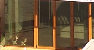 Los Yorkshire Terriers de Depp fueron grabados por una cámara aérea en la casa donde se aloja el actor.