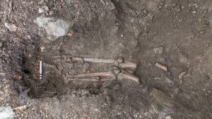 150915072025-02-tree-skeleton-ireland