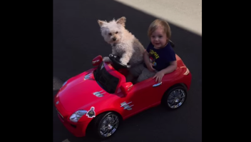 Daisy, la perra conductora VIDEO