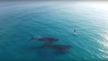 Ballenas persona paddle video viral drone