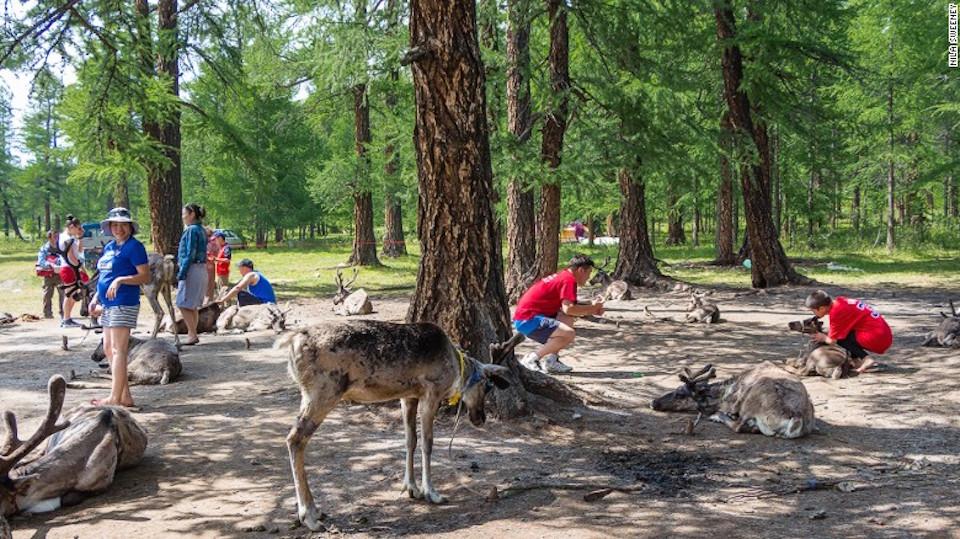 Turismo: una espada de doble filo – Los Dukha que viajan a lago Ubsugul se han enfrentado a las críticas de que la región es demasiado cálida para los renos.