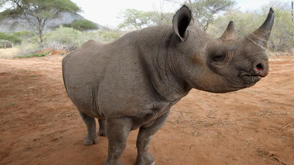 <> In Mkomazi National Park June 19, 2012 in Mkomazi, Tanzania.