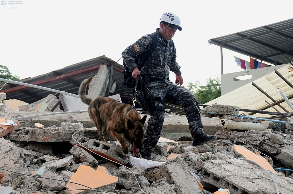 TOPSHOT - With the help of trained dogs, rescue workers in the city of Manta in Manabi province search on April 17, 2016 through the rubble for survivors of the 7.8-magnitude quake that hit Ecuador on Saturday. At least 235 people were killed by the powerful earthquake that destroyed buildings and a bridge and sent terrified residents scrambling from their homes, authorities said Sunday. / AFP / ARIEL OCHOA (Photo credit should read ARIEL OCHOA/AFP/Getty Images)