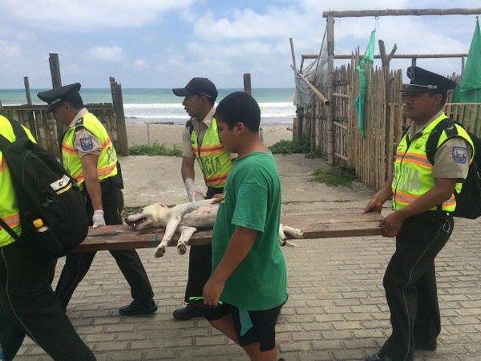 Rescatistas trasladan en una improvisada camilla a un perro afectado por el terremoto de 7,8 en Ecuador. (Crédito: Policía Nacional de Ecuador).