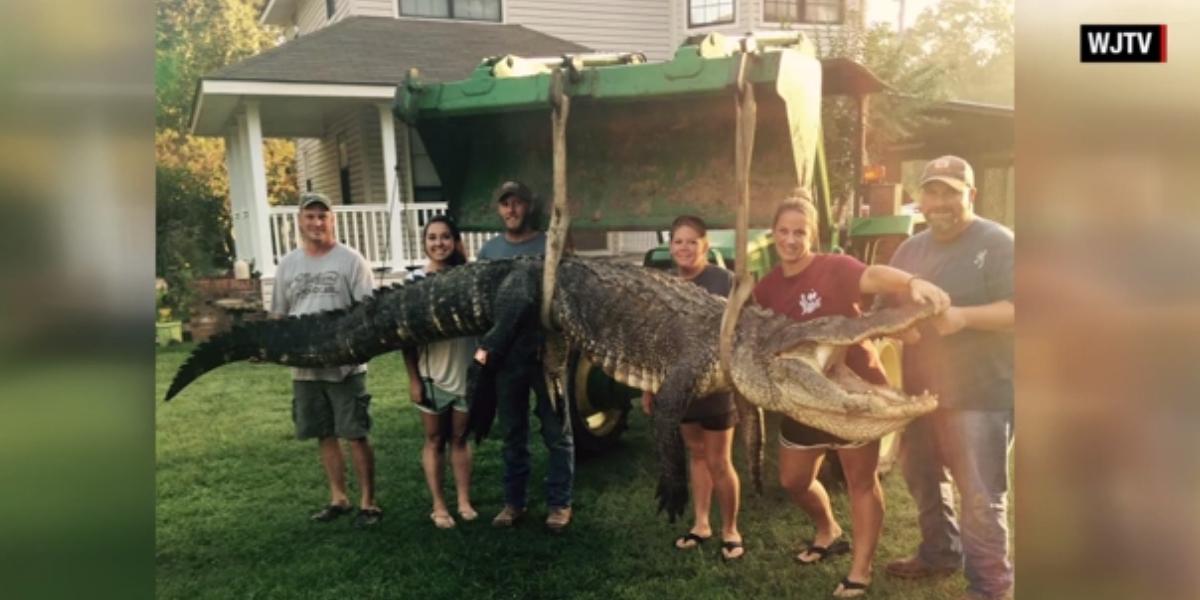 caiman monstruoso 4 metros 300 kilos cnn