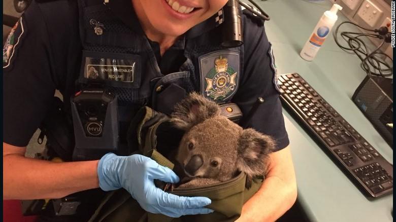 161107163103-australia-police-koala-in-bag-4-exlarge-169