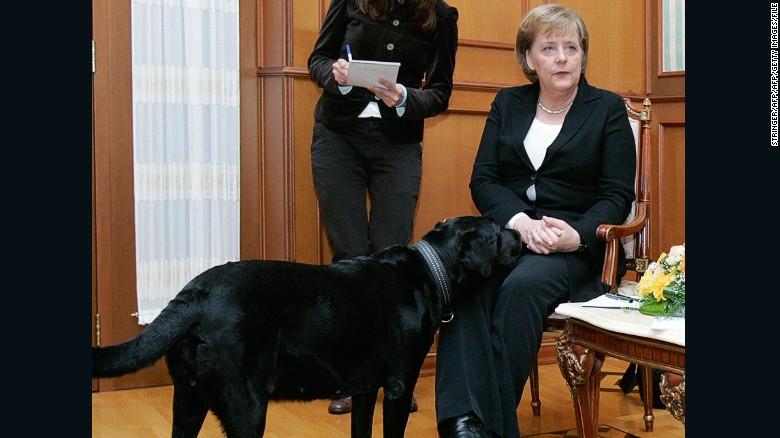 La canciller alemana, Angela Merkel, luce incómoda ante la presencia de Koni, una perra de Putin, en el 2007.
