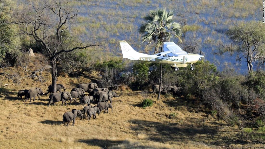 elefantes-extincion1