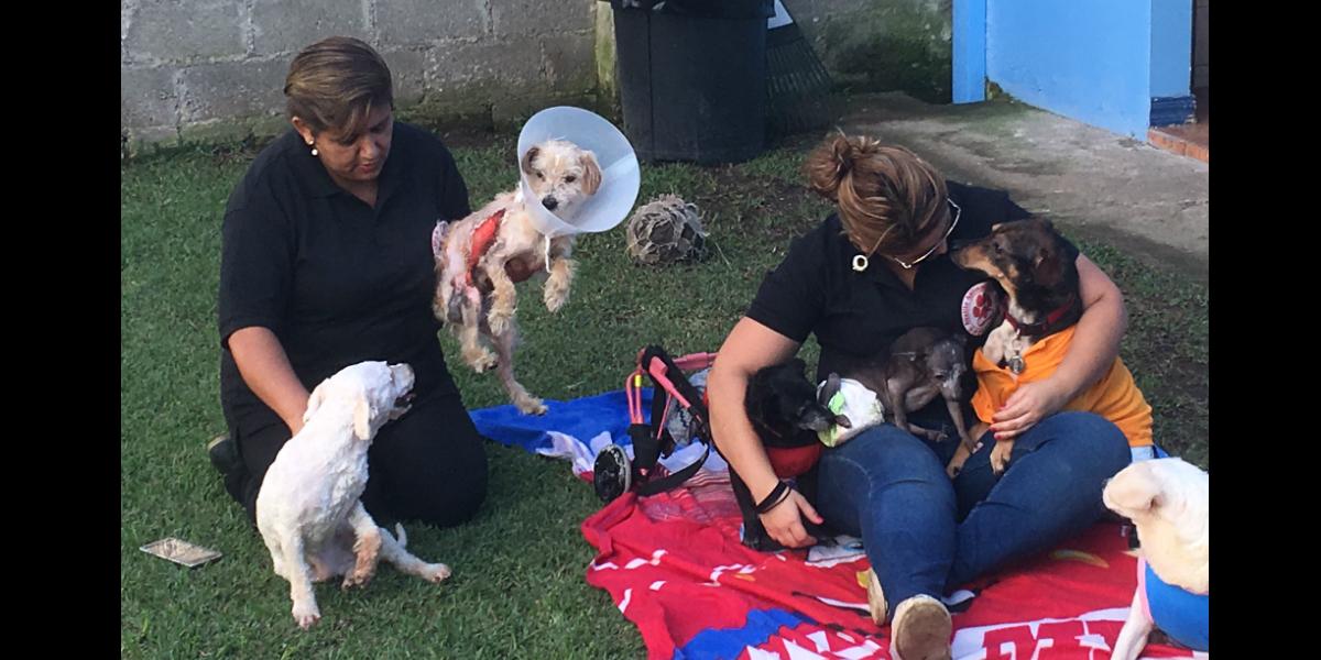 Todos los perros es esta foto tienen alguna discapacidad por atropello o abandono. A Boris ( blanco a la izquierda) le lanzaron ácido. (Crédito: Djenane Villanueva)