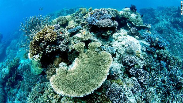 La Gran Barrera de Coral de Australia.