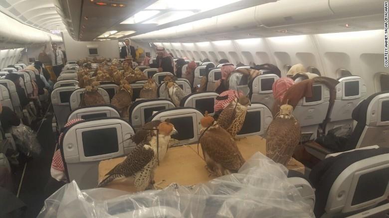 Ahmet Yasar publicó su fotografía viral de decenas de halcones y dice que estaban viajando a Jeddah, en Arabia Saudí.