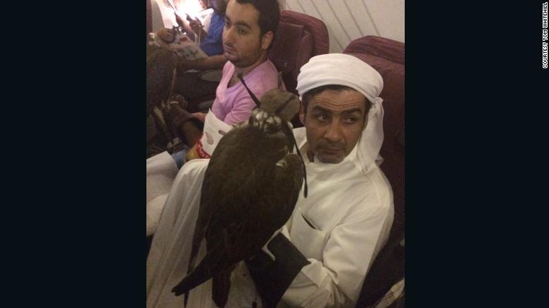 Qatar, Etihad, Emirates y Royal Jordanian Airlines permiten halcones en su zona de cabina.