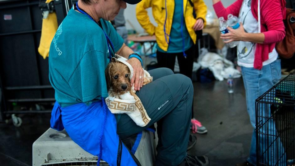 Un veterinario sostiene un perro en un refugio en el Centro de Convenciones George R. Brown tras el paso del huracán Harvey el 28 de agosto de 2017 en Houston, Texas. Crédito: BRENDAN SMIALOWSKI / AFP / Getty Images