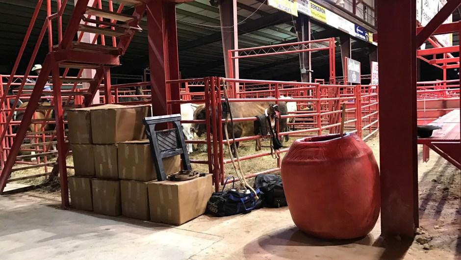 Así se ve tras bambalinas donde están los toros y los caballos del rodeo. De aquí salen a la arena a competir.