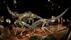 #EstoNoEsNoticia: subastan fósiles de dinosaurio