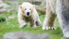 #EstoNoEsNoticia: el primer paseo de oso polar de 4 meses en Alemania