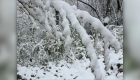 #LaImagenDelDía: la nieve cubre reserva en China