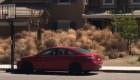 Plantas rodadoras invaden las casas de una ciudad