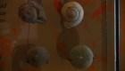 Hallan fósiles únicos de pez y mosca de millones de años en México