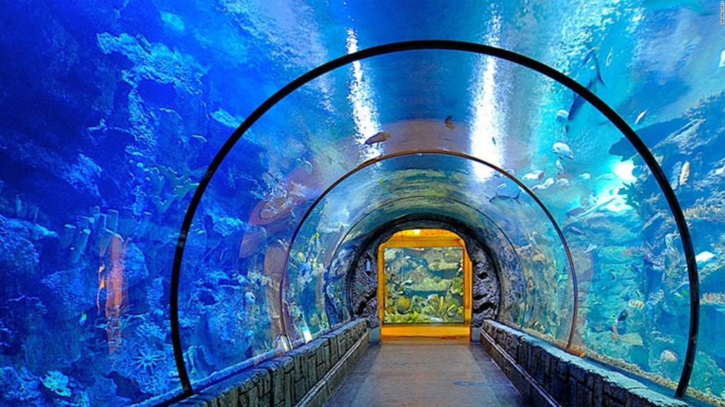 Así es el Arrecife de escualos del Mandalay Bay