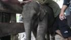 Curan a bebé elefante herido en Indonesia