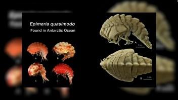#ElDatoDeHoy: descubren 18.000 nuevas especies