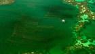 #ElDatoDeHoy: algas: ¿la comida del futuro?
