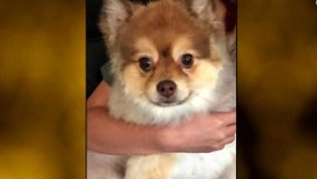 Muere un perro en un vuelo de Delta