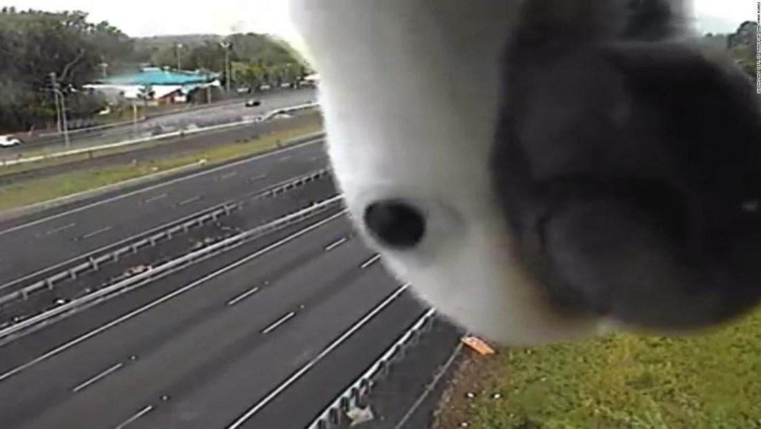 #LaImagenDelDía: una cacatúa curiosa bloquea una cámara de tráfico