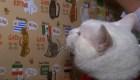 Aquiles, el gato que pronostica el Mundial de Rusia