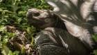 #ElDatoDeHoy: Ecuador recibirá 27 tortugas de Galápagos