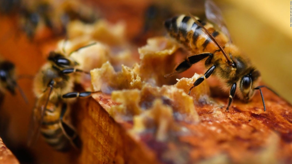 Un enjambre de abejas en Times Square