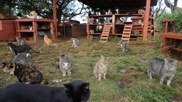 Bendice a las bestias: casi 600 gatos de todas las formas y tamaños tienen un lugar al que llamar hogar por el resto de sus vidas.