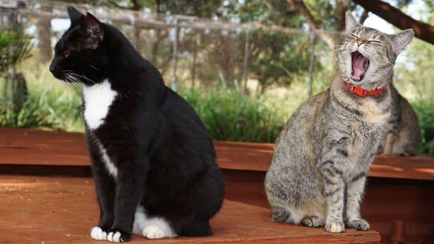 Vida de ensueño: para muchos de los gatos, esta es una oportunidad de vivir una vida llena de comida y muchas horas de siesta.