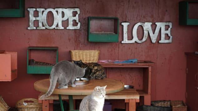 Todos los gatos del santuario pueden ser adoptados