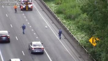 #EstoNoEsNoticia: la travesía de un perro perdido en una autopista