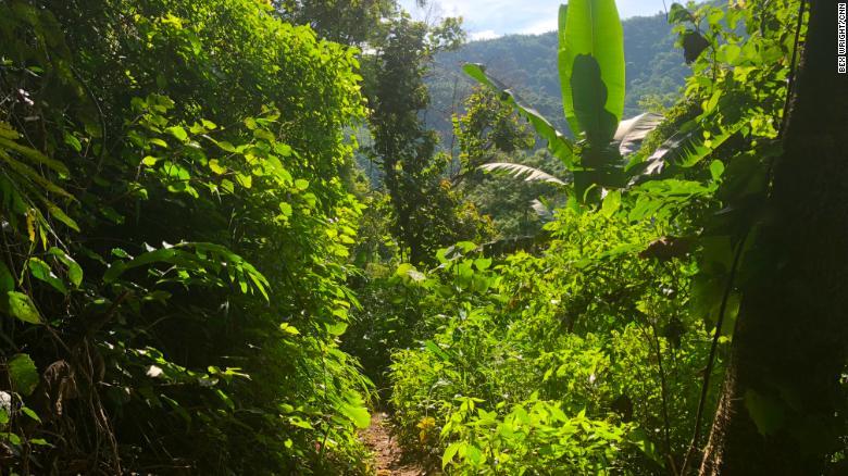 El área alrededor del sistema de cuevas donde los niños y su entrenador están atrapados es muy arbolada y de difícil acceso.