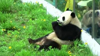 #EstoNoEsNoticia: celebración con torta de vegetales y frutas para un panda gigante