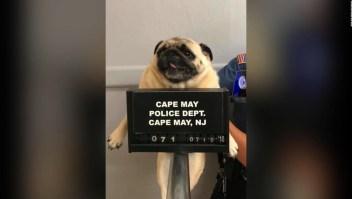 La perrita más buscada de New Jersey