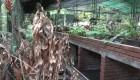 El Jardín Botánico de Caracas se marchita