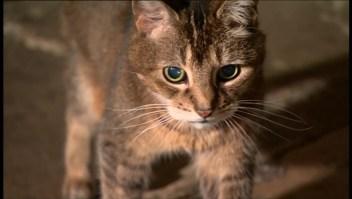 """#EstoNoEsNoticia: la gata """"santa"""""""