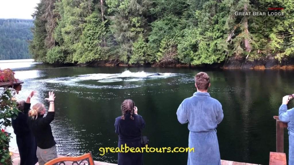 Estos turistas tuvieron el desayuno de su vida, con ballenas jorobadas incluidas