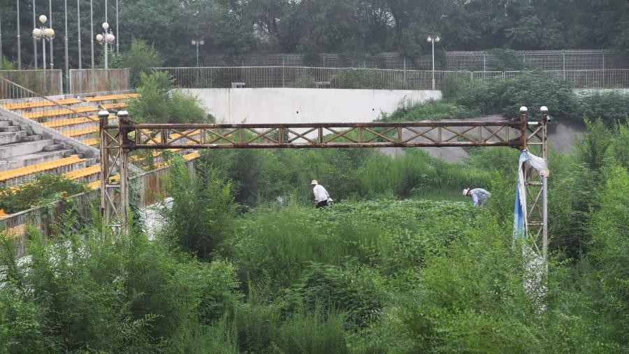 Regreso a la naturaleza: a medida que la naturaleza recupera las estructuras artificiales, la gente planta verduras cerca de la antigua línea de meta de la pista de BMX utilizada para los Juegos.