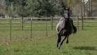 Este caballo está demandado a su antiguo dueño
