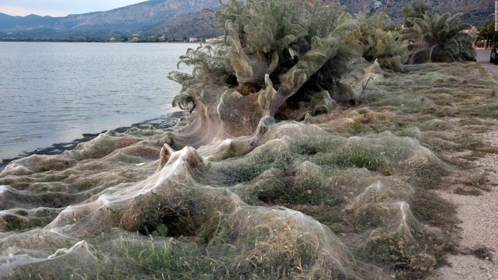 Arañas envuelven con sus telas a esta ciudad griega