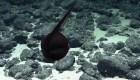La habilidad única de esta anguila te sorprenderá