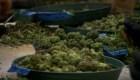 #LaCifraDelDía: 30 gramos de marihuana parámetro para otorgar indulto en Canadá