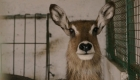 #ElDatoDeHoy: Rescatan animales vivían en malas condiciones en zoológico